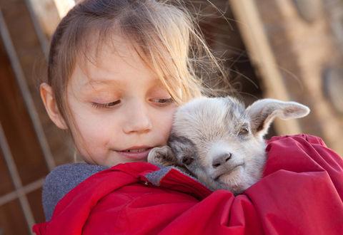 【ほっこり】赤ちゃんヤギを「抱きしめて温める」ボランティア