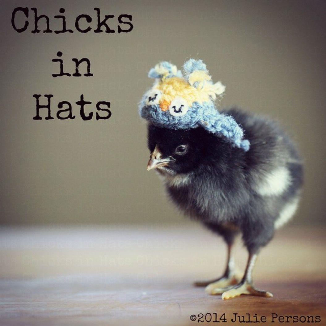 素敵な帽子でオシャレした、ヒヨコたちのファッションショー