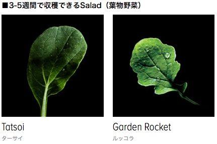 3週間ほったらかしでもOK!「ハーブや野菜」を自宅で水耕栽培できるキット