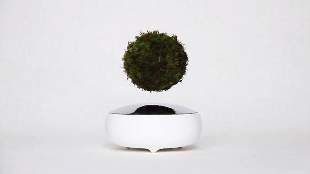 【注文殺到】宙に浮かぶ盆栽「Air BONSAI」が大人気のワケ