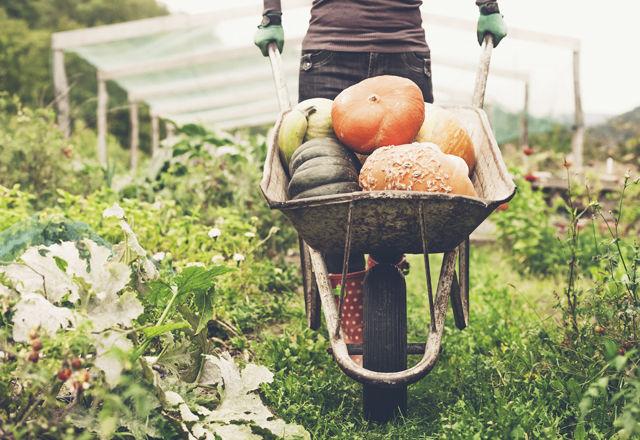無農薬、無肥料、無除草剤。石川県・はくい市で「オーガニック給食」がスタート