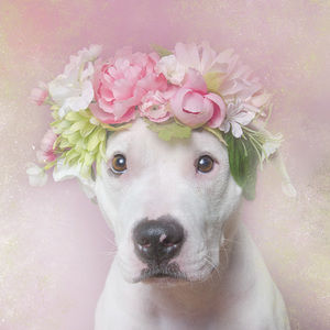 殺処分予定の犬が「お花」と一緒に写真を撮ったら・・・600匹以上の里親が見つかる!