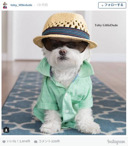 フォロワー8.5万人。黒ぶちメガネのおしゃれ犬が、Instagramで大人気