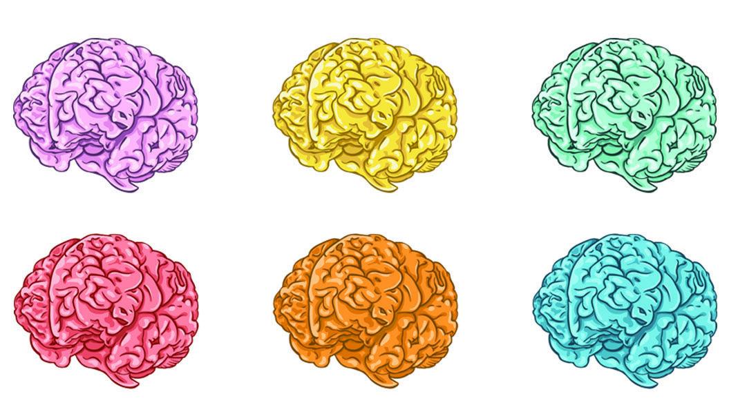 人間の細胞からつくった「ミニ脳」で、動物実験がいらなくなるかも・・・