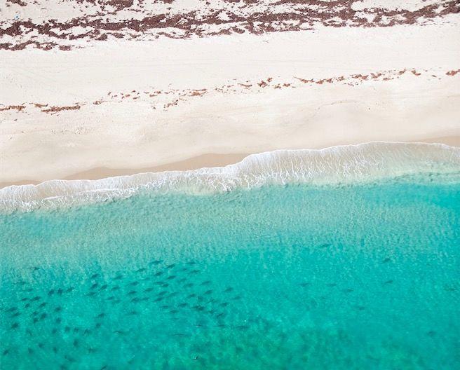 10,000匹を超えるサメがビーチに集結!?一体なにが・・・