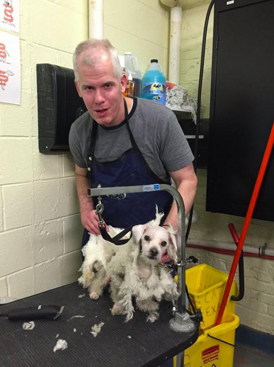 シェルター犬を無償でトリミングし続けた男性。結果、里親が続々見つかる