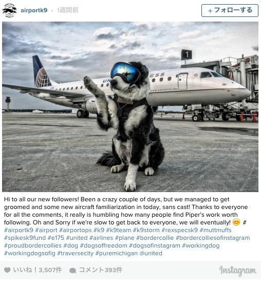 空港の安全を守る「ゴーグル犬」彼にしかできない特別な任務とは?