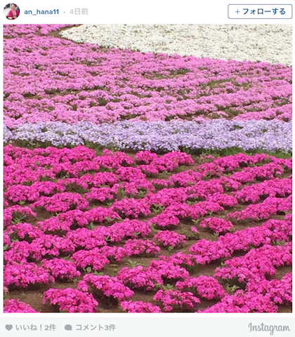 埼玉・羊山公園「芝桜の絨毯」が、ふわふわで華やかすぎる