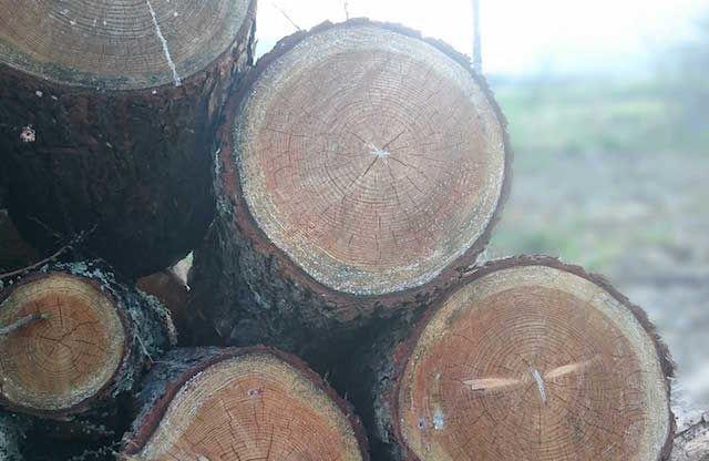 ボディ全体が国産の木でできたヘッドホン「Konohazuk H3」