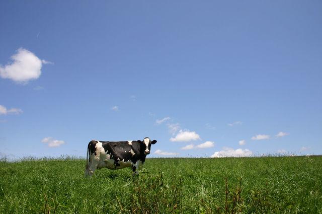【衝撃のコラボ】乳業メーカーと醸造のプロが開発した「ヨーグルトにかけるお醤油」