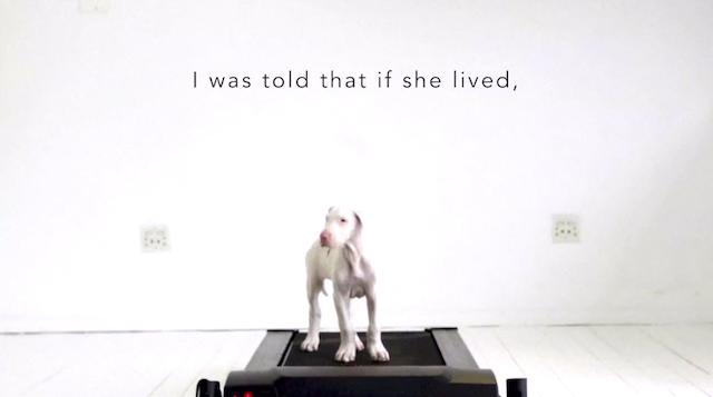 「長く生きられない」と告げられた子犬の成長を記録した動画