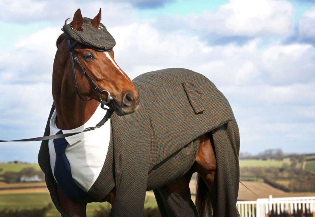 紳士の国・イギリスでは馬も着飾ります