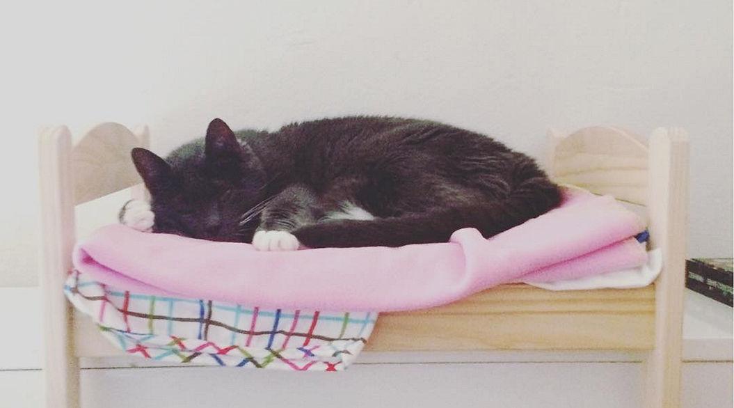 IKEAのドール用ベッドを愛用するネコが急増中