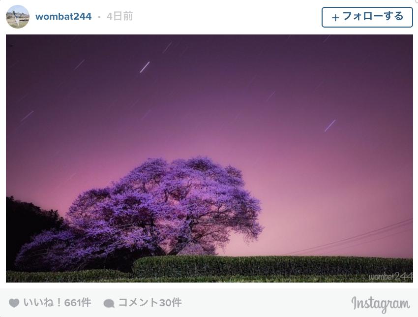今年も満開、ありがとう。日本全国「ダレカニミセタイ」桜景色11選