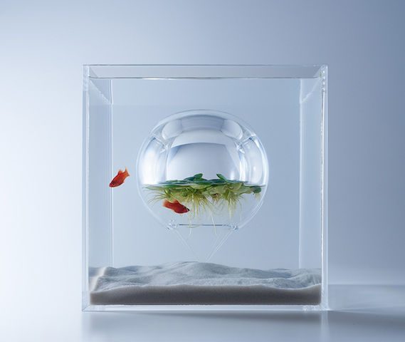 水中の温室、エビの階段・・・生きものたちとコミュニケーションできる「美しい水槽」(全5種)