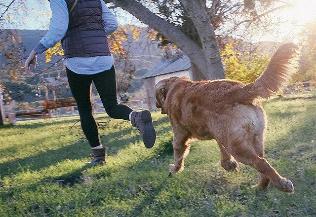 犬好き必見!シニア犬がいきいきする「8つの秘訣」