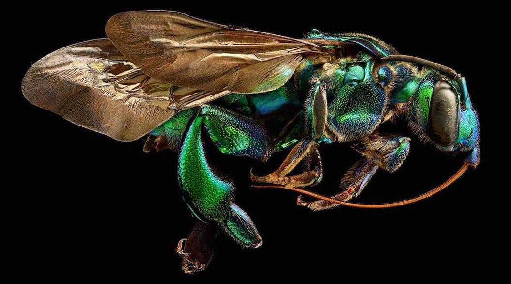 一流のコマーシャルフォトグラファーが挑んだ「美しすぎる」昆虫写真って?