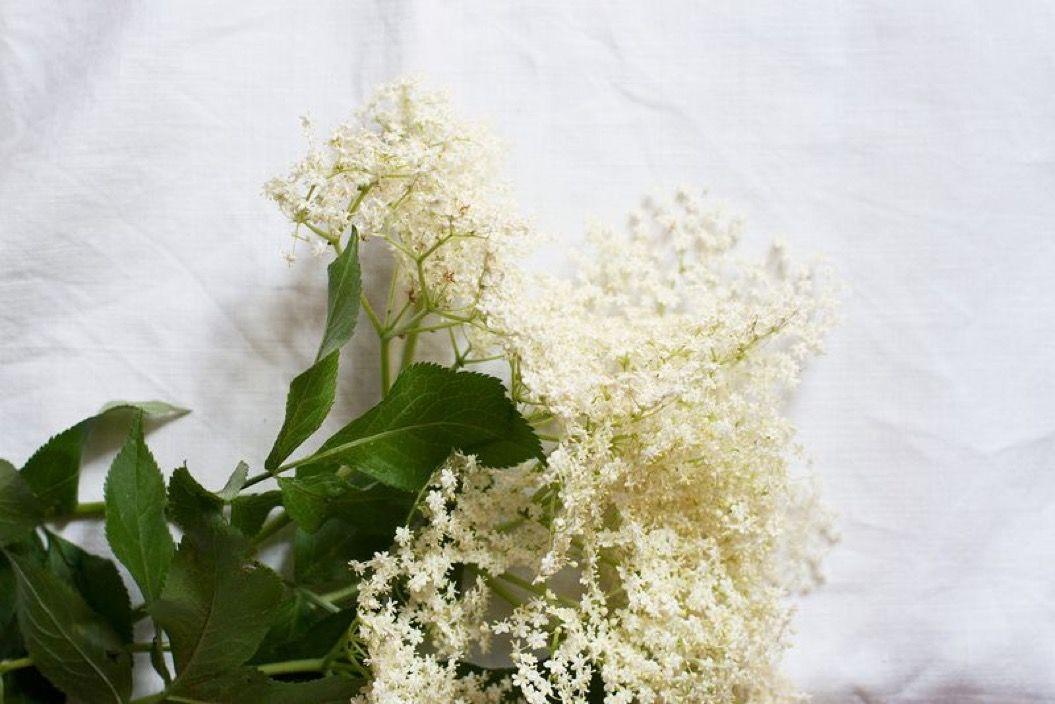パーティーでこそ試したい。「お花」を使った♡なレシピ
