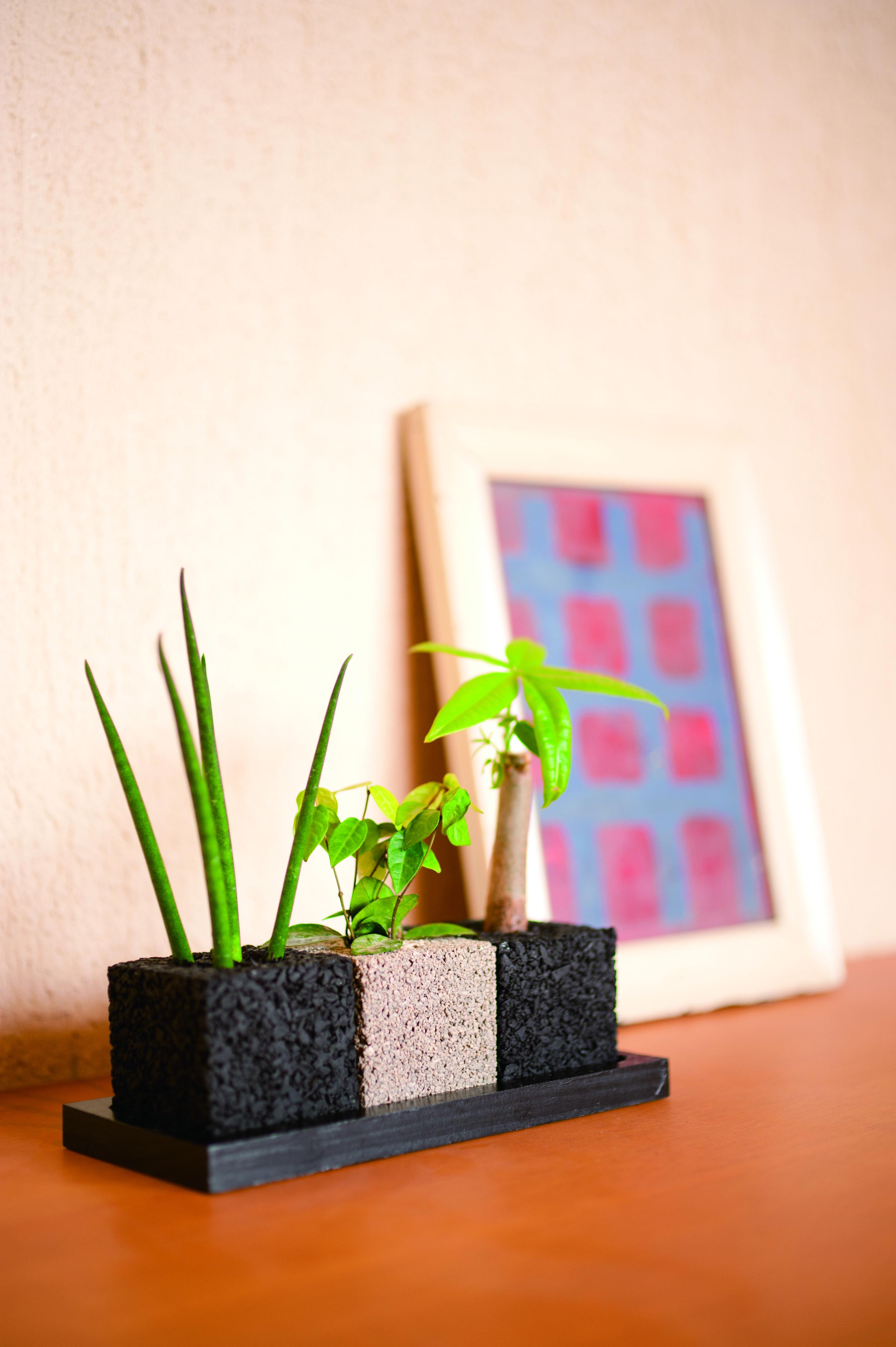 消臭機能をプラスした観葉植物「eco-pochi」。発想がイイね!