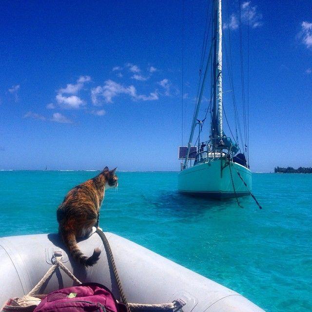 女ひとり、猫1匹の素敵なヨット旅(写真16枚)