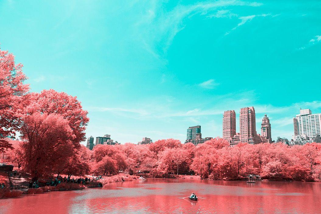 セントラルパークが真っ赤に染まった!その驚きのワケとは?