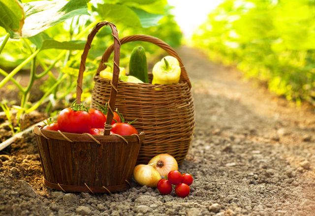 プラスチックを食べて、肥料に変える「虫」が発見された・・・