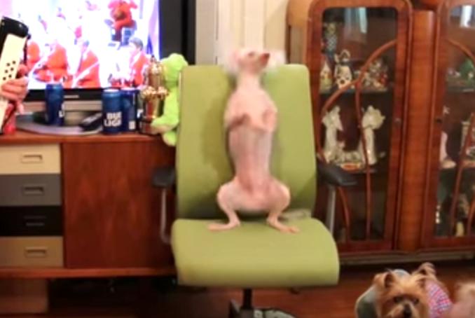 【もう止めて〜】お婆ちゃんの演奏にカラダが反応しちゃう「ひょうきん犬」