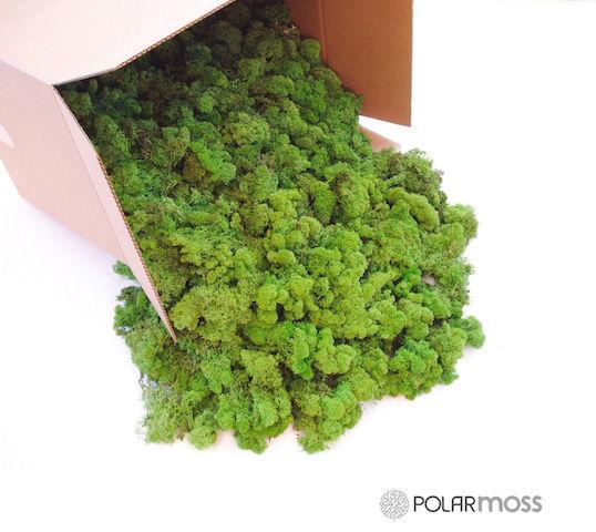 ふわモコな「苔」でお部屋を装飾。こんな北欧スタイルもいい感じ