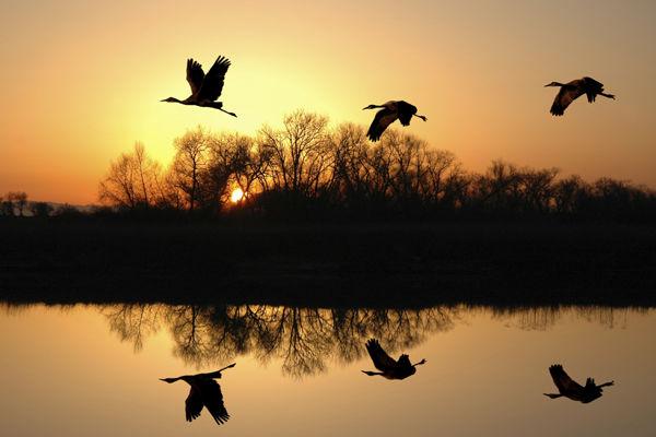 鳥の行動による夢