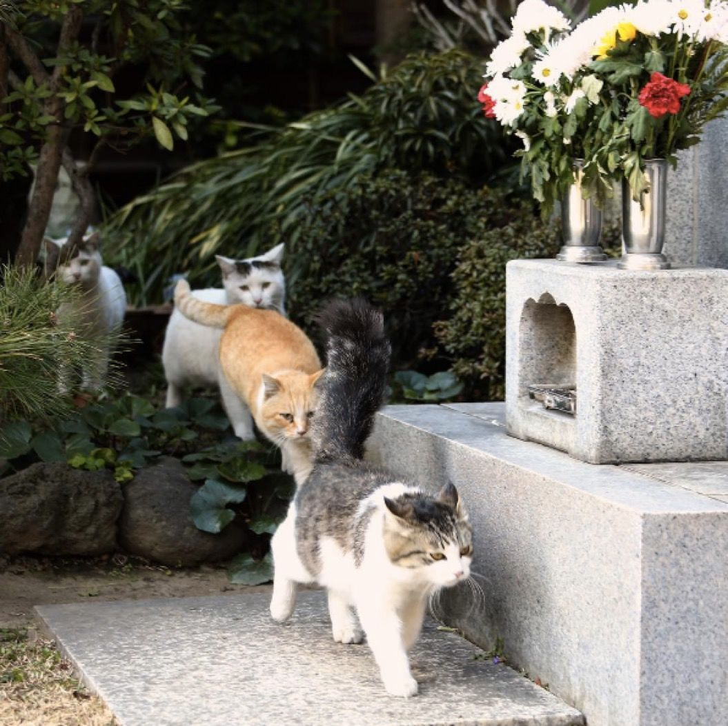 ネコザイル?猫写真家がとらえた奇跡の団体行動(5枚)