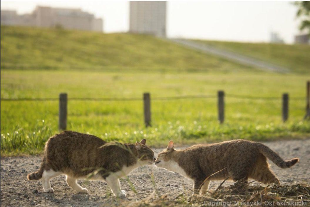 【猫写真家が撮る野良猫シリーズ】愛を感じる「仲良し」編(5枚)