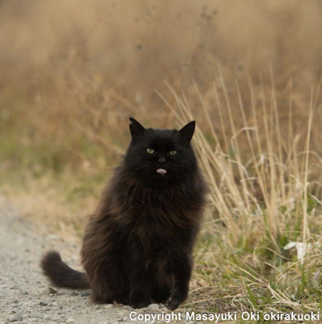 【猫写真家が撮る野良猫シリーズ】思わず出ちゃった「舌ぺろり」編