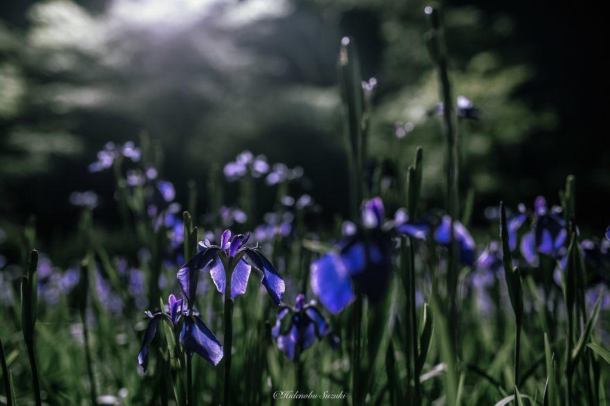 こんなにきれいだったんだ・・・「梅雨」の魅力に気づかせてくれる写真9選