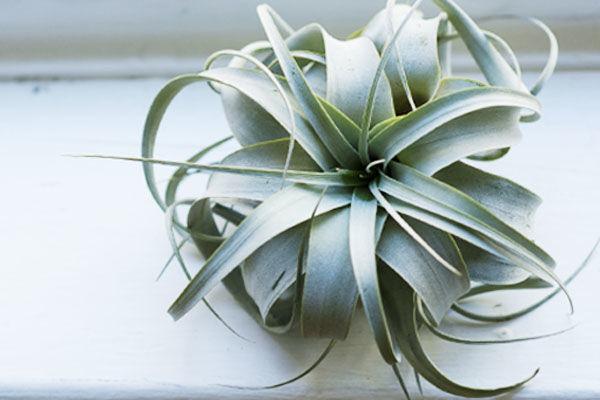 【家のタイプ別】観葉植物を置いて、クリーンでニオイの少ないトイレに