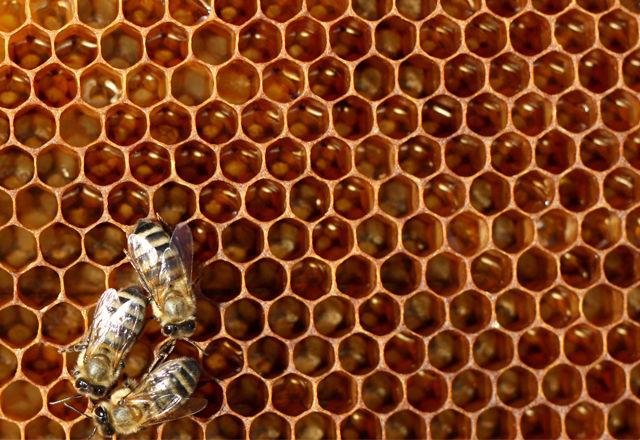 アボカド、ベリー、コーヒー・・・世界の1/3の作物が消滅する原因がハチ?