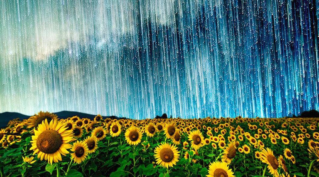 ヒマワリに星が降り注ぐ!日本人写真家による「星空アート」がロマンチック