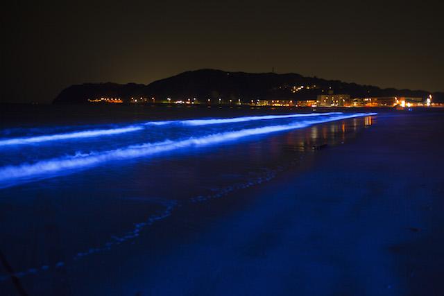 まるでモルディブの青白く光るビーチ!「NIGHT WAVE」が、今日から湘南エリアで開催
