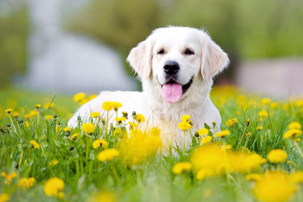 犬が飼い主にみせる 10の愛情表現 Tabi Labo
