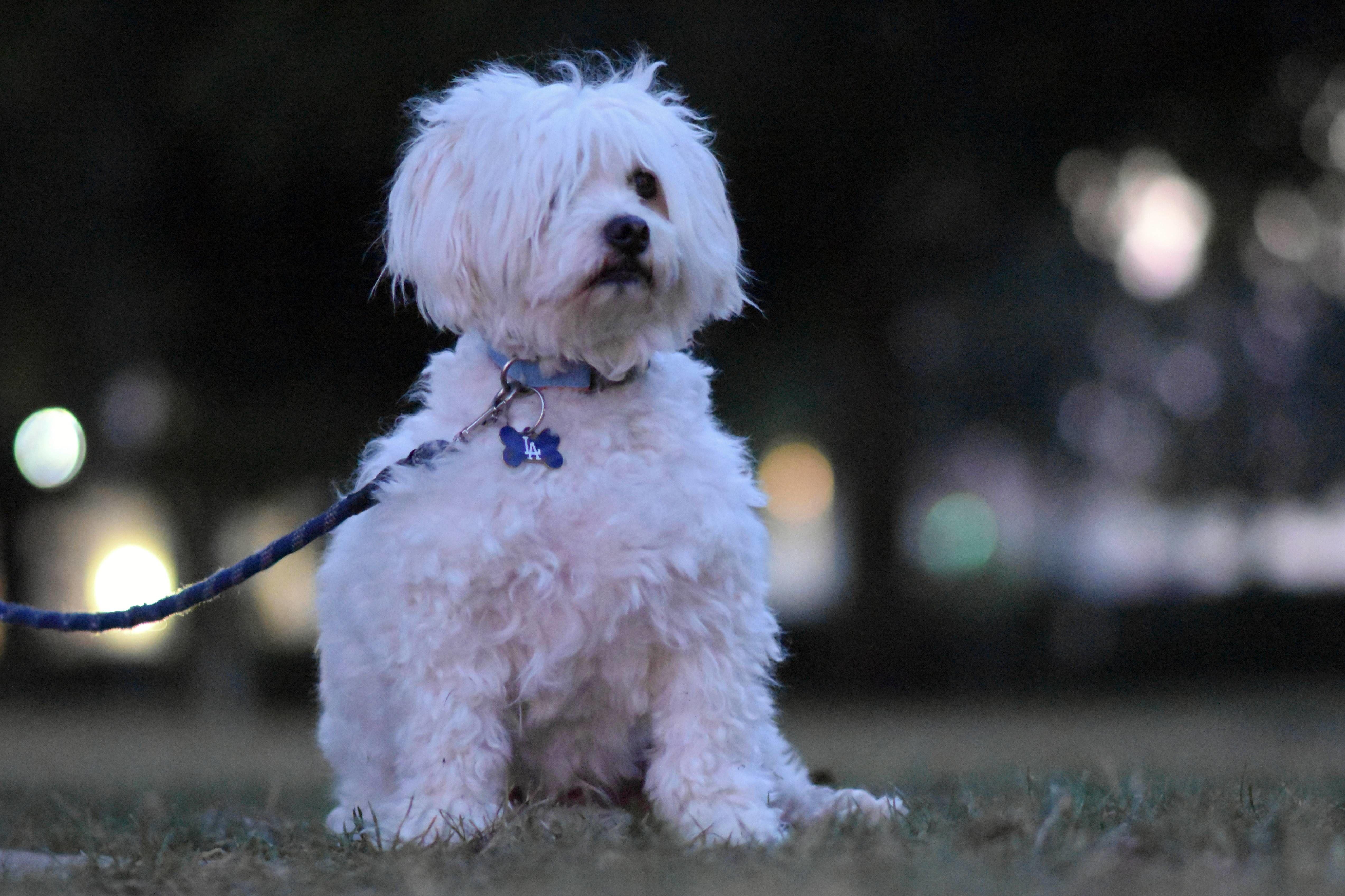 本当は犬が好きじゃないパパがつくった「飼うための契約書」が厳しすぎる!でもじつは・・・