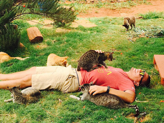 約500匹が暮らす「猫の楽園」が、実はハワイにもあった!(動画あり)