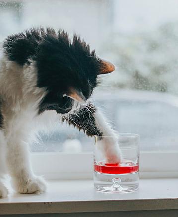 さあ乾杯しよう!ペットと一緒に楽しめる「犬・猫用ワイン」が登場