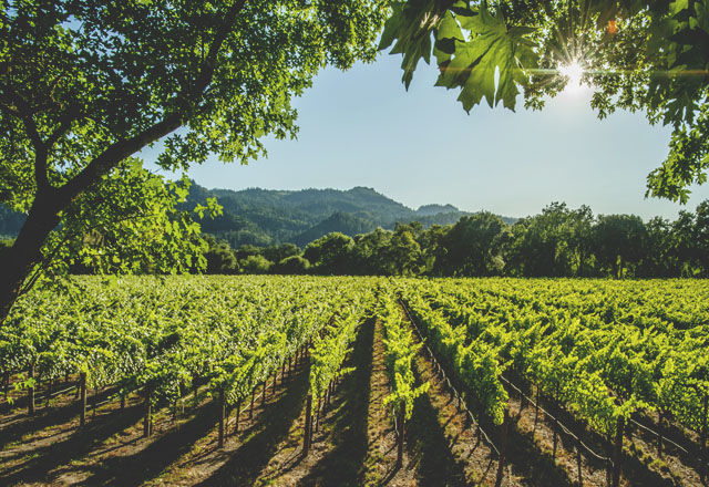 豪カンタス航空がエコノミーでも、無料でワインの「テイスティングサービス」を始めた理由