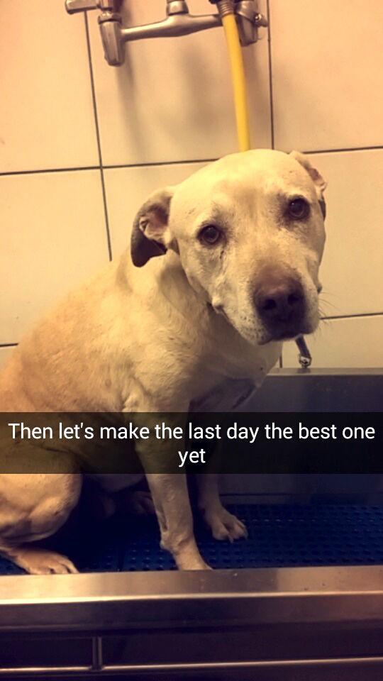苦渋の決断をした家族と愛犬ハンナの物語。「最期の一日」に思わず涙