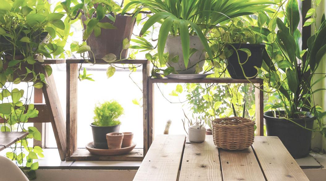 NASAやアメリカ化学会がオススメする「室内の空気を浄化する観葉植物」。