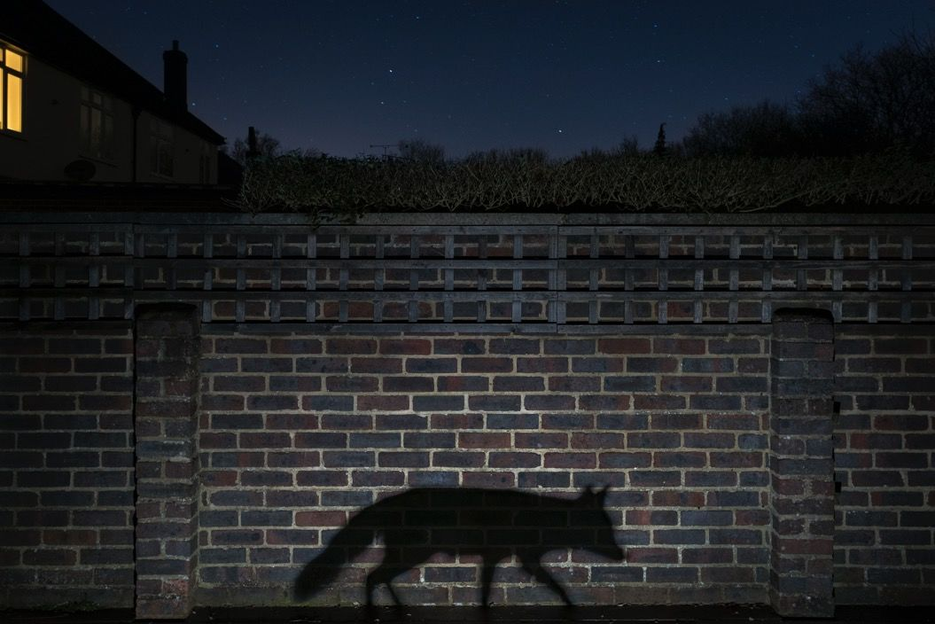 赤キツネが北極キツネを・・・野生動物の世界を写した「9枚の衝撃的な写真」
