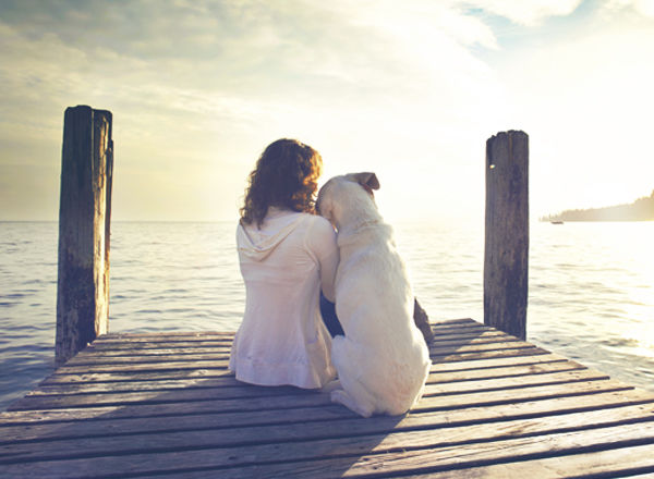 犬は、人の言葉や気持ちをちゃんと理解している。(研究結果)
