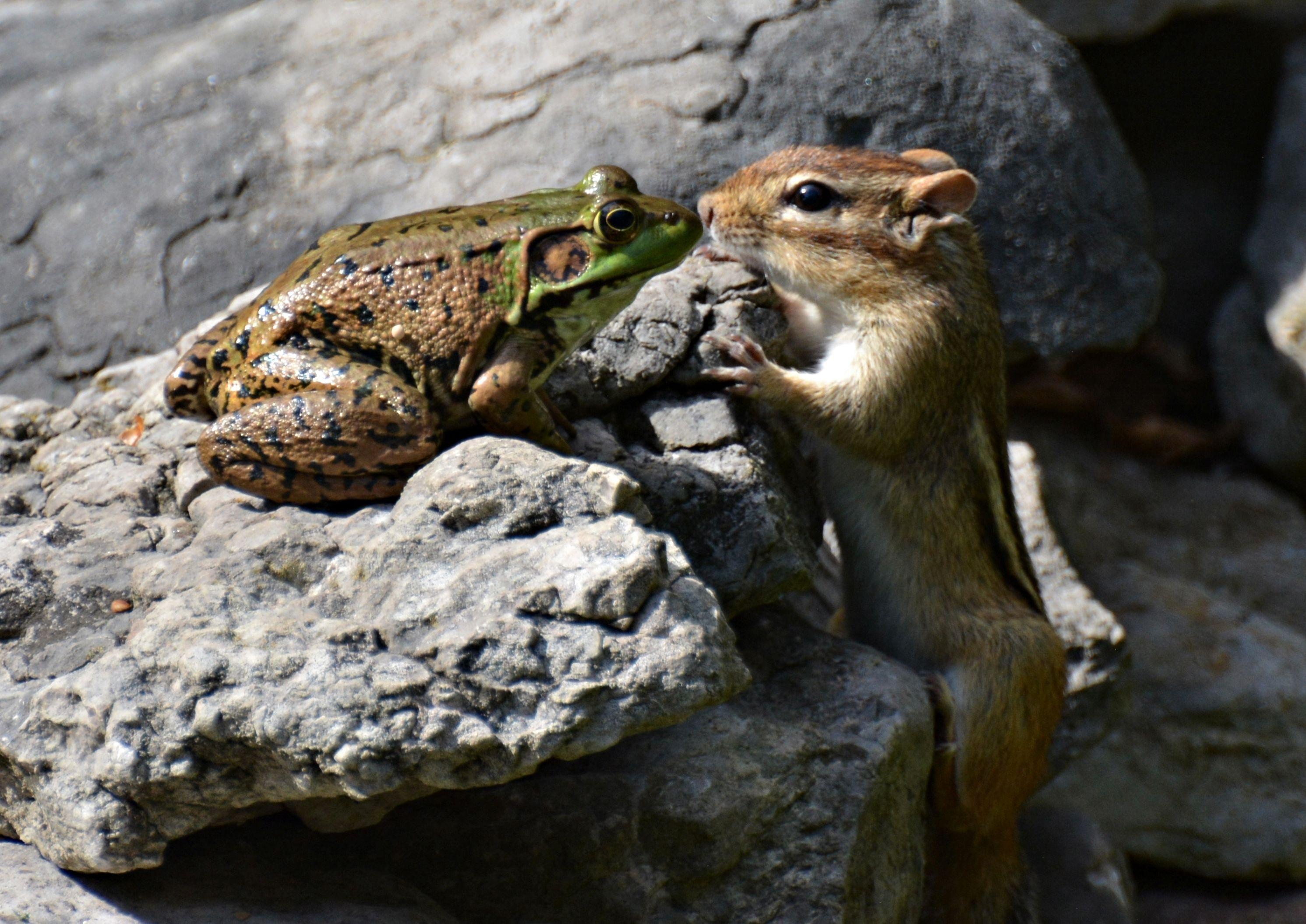 偶然の一枚が集結!ニヤニヤ笑える「野生動物写真アワード」。