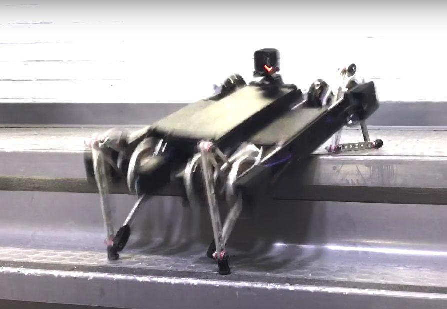 四足ロボットが、急に可愛くなってきた。