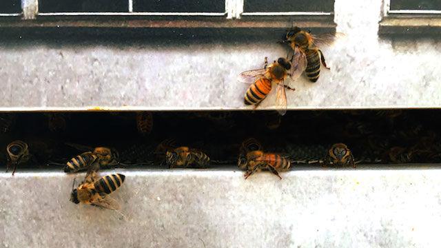 ミツバチのためのナイトクラブがオープン。「彼らにも楽しんで生きる権利がある」