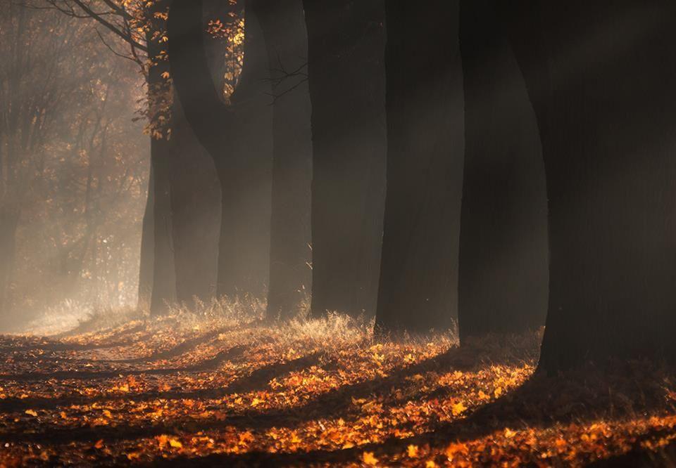 こんなカエデ並木を歩いてみたい。ポーランドの紅葉が絵本のよう